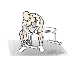 Best Arm Workout - CONCENTRATION CURLS